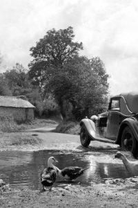 Country Lane at St Kew, 1950s (Card)